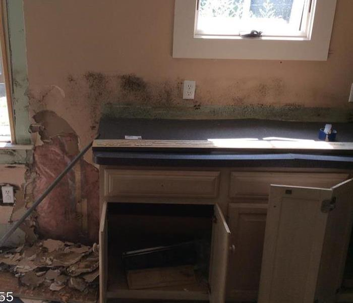 Mold Remediation Kitchen Mold - Plymouth, MA
